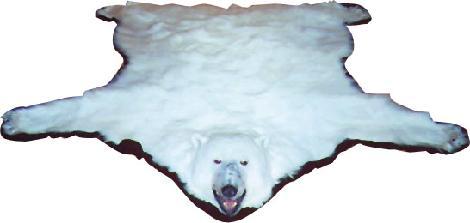 Bear Skin Rugs