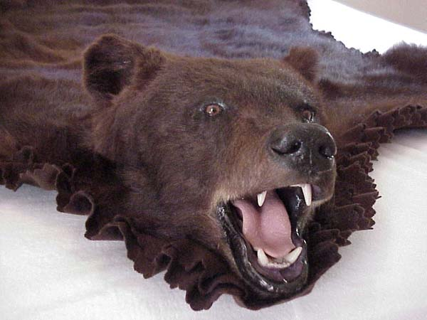 1000+ Images About Bear Skin Rugs On Pinterest