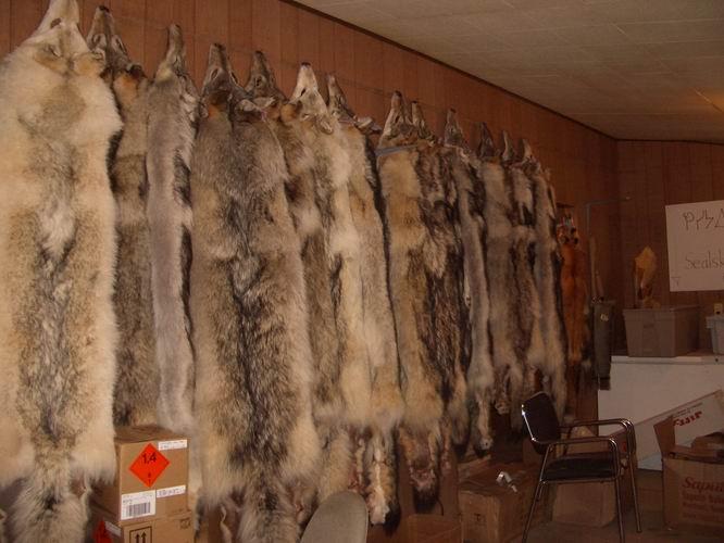 wolf pelts